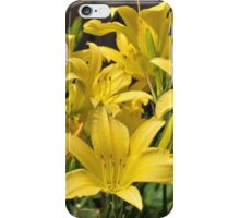Yellow daylilies iPhone Case/Skin