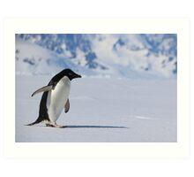 Adelie Penguin in Antarctica,   23 Art Print