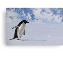 Adelie Penguin in Antarctica,   23 Canvas Print