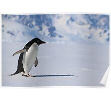 Adelie Penguin in Antarctica,   23 Poster