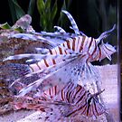 Lionfish by Gloria Abbey