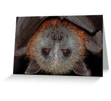 Grey-headed flying fox Greeting Card