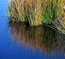 Reeds in Water 2 by Jerome Petteys