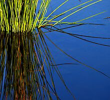 Reeds in Water 3 by Jerome Petteys