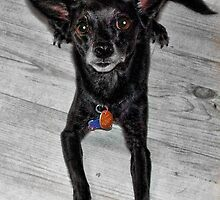 Cassie the Wonder Dog by GolemAura