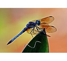 Dragonfly on a Leaf  *After* Photographic Print