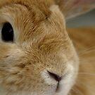 Mr Benjamin Bunny by BecQuist