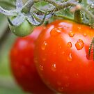 First Tomato by Lawrie McConnell