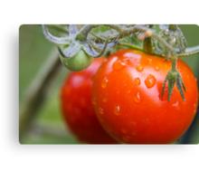First Tomato Canvas Print