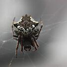 Woodshed Spider by Steven Carpinter
