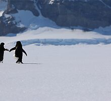 Adelie Penguins in Antarctica,   21 by Janai-Ami