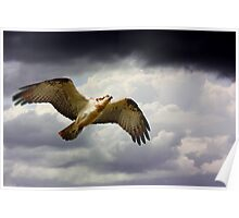 Flying the Storm Poster