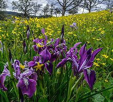 Wild Flowers by Charles & Patricia   Harkins ~ Picture Oregon