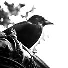 Guided by the Crow by dansLesprit