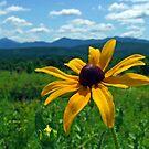 Black Eye of the Adirondacks by Brian Pelkey