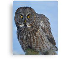 Great Gray Owl Portrait II Metal Print