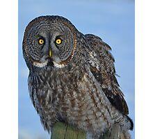 Great Gray Owl Portrait II Photographic Print