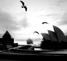 A Sydney Morning by sterio