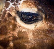 Eye See You by dansLesprit