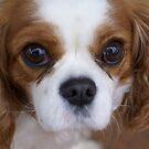 sweet little Rosie by BronReid