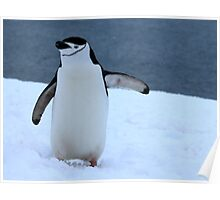 Chinstrap penguins in Antarctica, 3 Poster