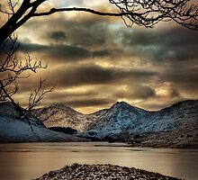 Arklet Branches by Karl Williams