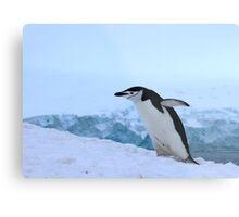 Chinstrap penguin in Antarctica, 4 Metal Print