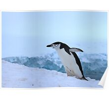Chinstrap penguin in Antarctica, 4 Poster