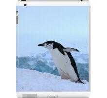 Chinstrap penguin in Antarctica, 4 iPad Case/Skin