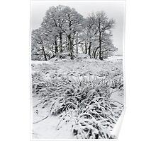 """""""In Winter's Garden"""" Poster"""