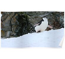 Chinstrap penguins in Antarctica,    5 Poster