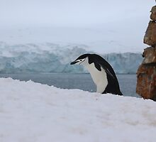 Chinstrap penguins in Antarctica,    7 by Janai-Ami