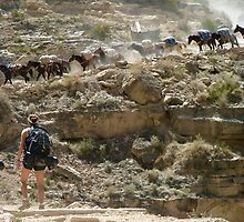Busy Day on Havasu Canyon Trail by Brent Sisson