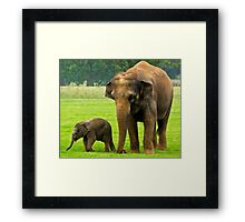 Elephant and Calf Framed Print