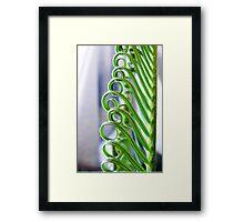 Cycad Curls Framed Print