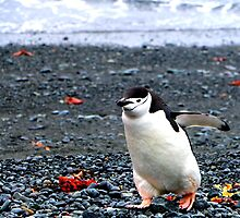Chinstrap penguins in Antarctica,    10 by Janai-Ami