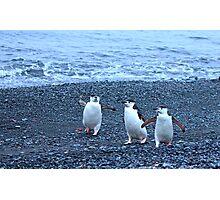 Chinstrap penguins in Antarctica,    11 Photographic Print