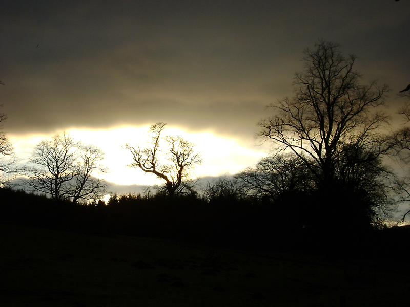 Eye of Trees (sunset, Falkland) by armadillozenith