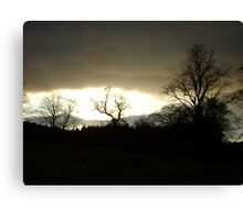 Eye of Trees (sunset, Falkland) Canvas Print