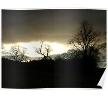 Eye of Trees (sunset, Falkland) Poster