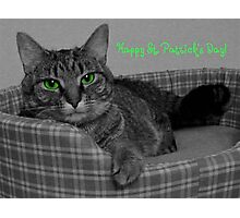 Happy St. Patrick's Day From Gracie Photographic Print