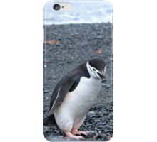 Chinstrap penguins in Antarctica,    13 iPhone Case/Skin