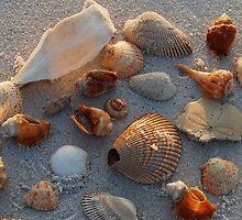 Beach Treasure by GFORCE