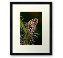 Butterfly on Branch Framed Print