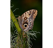 Butterfly on Branch Photographic Print