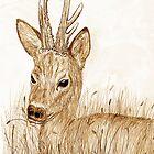Roe Deer pencil sketch Card by sharpie