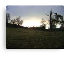 sunset, Falkland (trees, field with molehills, fence) Canvas Print