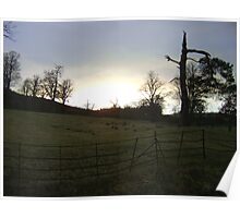 sunset, Falkland (trees, field with molehills, fence) Poster