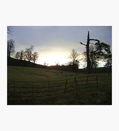 sunset, Falkland (trees, field with molehills, fence) Photographic Print