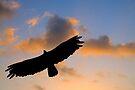 Hawk over Vinales Valley, Cuba by David Carton